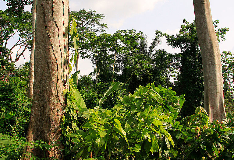 To conserve and protect natural resources and biodiversity in cocoa producing countries —