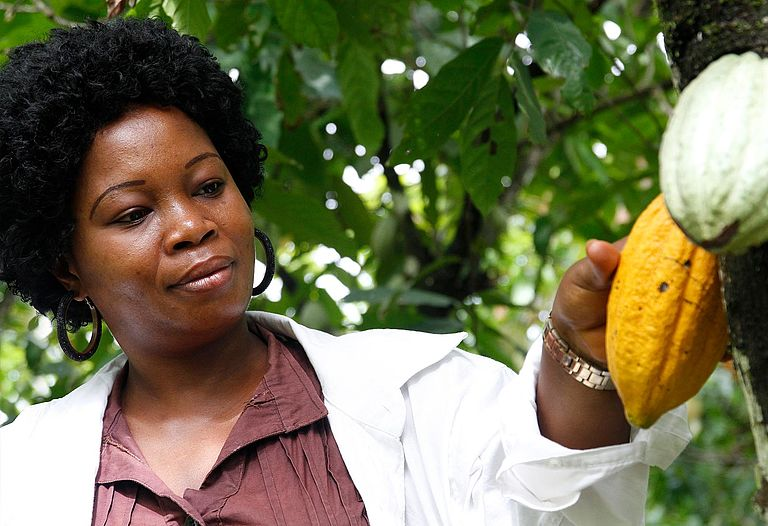 To increase cultivation and commercialization of sustainably produced cocoa —